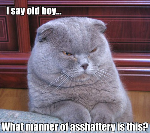 cat asks, I say old boy, what manner of asshattery is this?