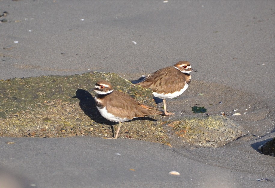 muslim singles in killdeer Scheer to unveil support for single-form quebec tax return  killdeer nest stalls  nigeria in turmoil as 86 reported dead in clashes between muslims and.