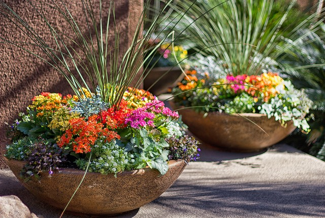 Perennials are the gift that keeps on giving - Potted autumn flowers ...