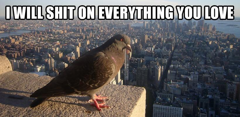 nyc_pigeon.jpg