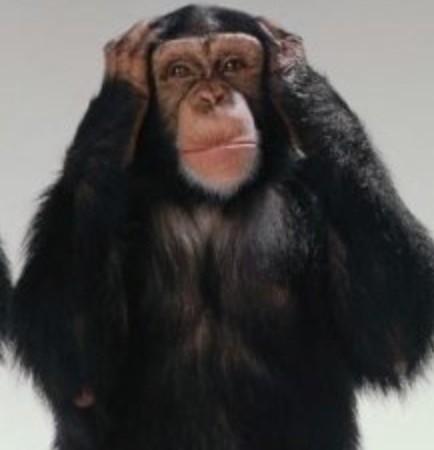 blog-274-monkey.jpg