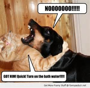 how to give a cat a bath funny