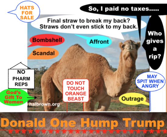 Donald-one-hump-trump.png