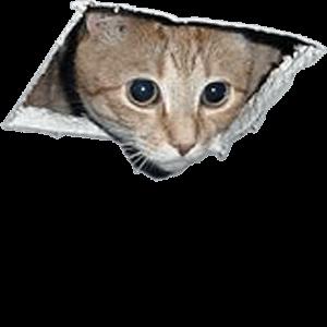 Supreme Cat Meme