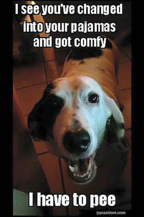 When I Ask My Dog What He S Eating Meme