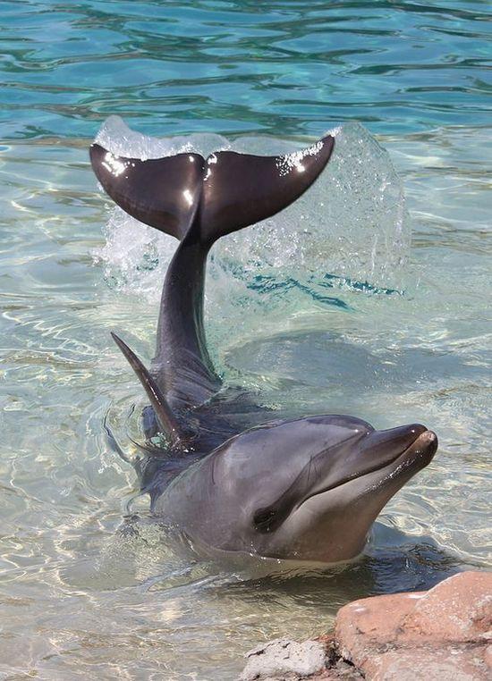 dophinsun.jpg