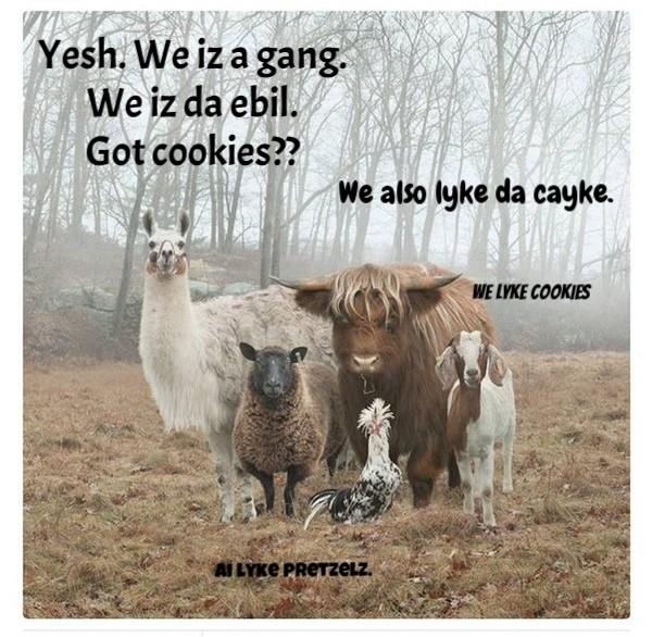 PWB: The Freidai Gang.....Gangs Together