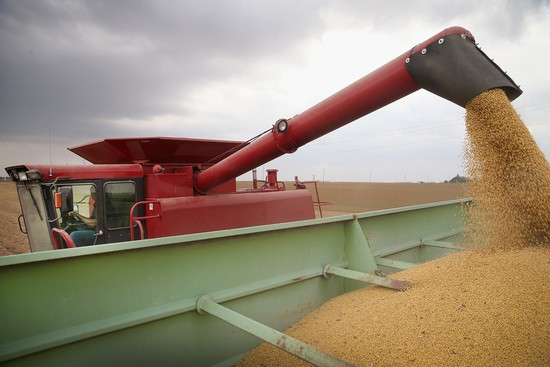 WORTHINGTON, MN - OCTOBER 02: Greg Porth harvests soybeans on October 2, 2013 near Worthington, Minnesota. According to the Commerce Department, farm earnings nationwide were down 14.6% during the second quarter of the year. Many Midwest states, which are rebounding from last year's severe drought, reported some of the biggest drops. (Photo by Scott Olson/Getty Images)