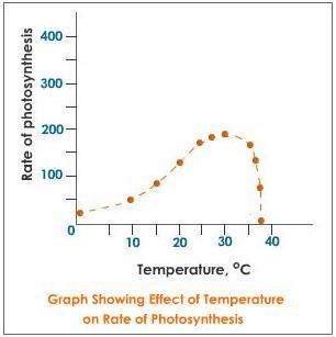 temperature-effect-on-photosynthesis.jpg