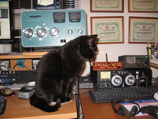 Cat_and_Ham_radio_image_2_.jpg