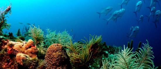 coralreefkeys.jpg