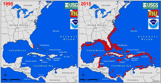 The Daily Bucket Managing Invasive Lionfish In The Caribbean - Large us map offshore numbers