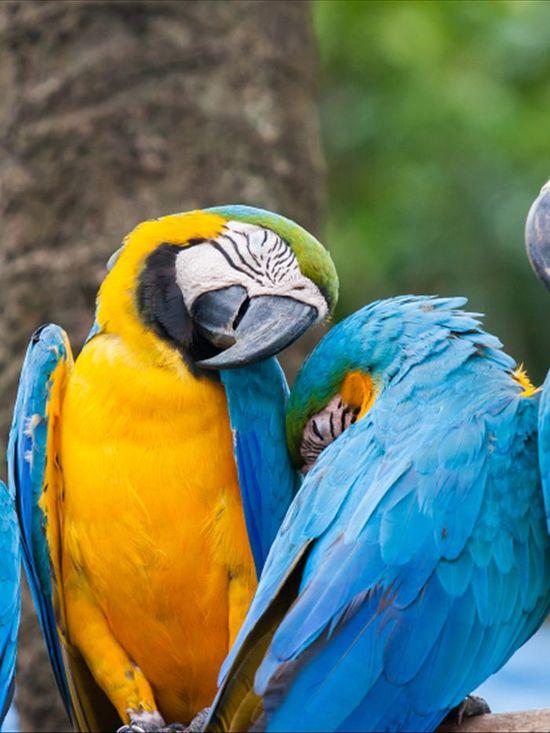 sleeping_parrots.jpg
