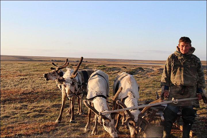 reindeerherder.jpg