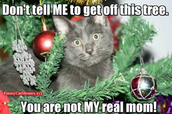 Merry Christmas My Friend.Merry Christmas To My Friends On Daily Kos That Celebrate It