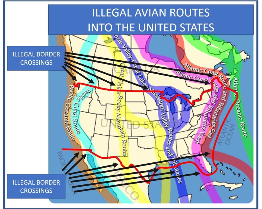 Illegal_Avian_Routes.jpg