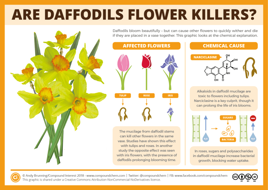 Do Daffodils kill other flowers