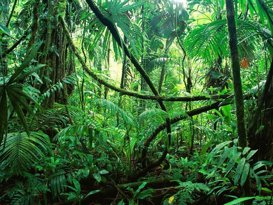 The Amazon Rainforest has reached the tipping point.
