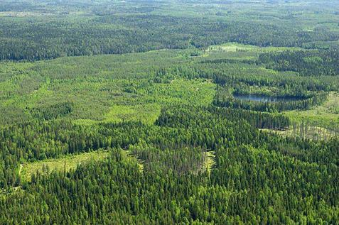 Finland has ten trees for every person in the world.
