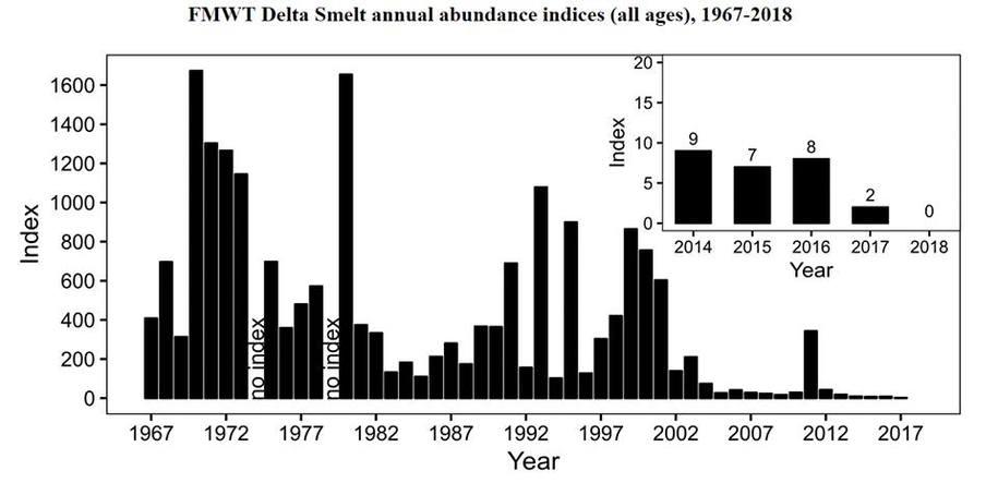 Bernhardt, former Westlands lawyer, working to strip Delta Smelt protection as fish nears extinction