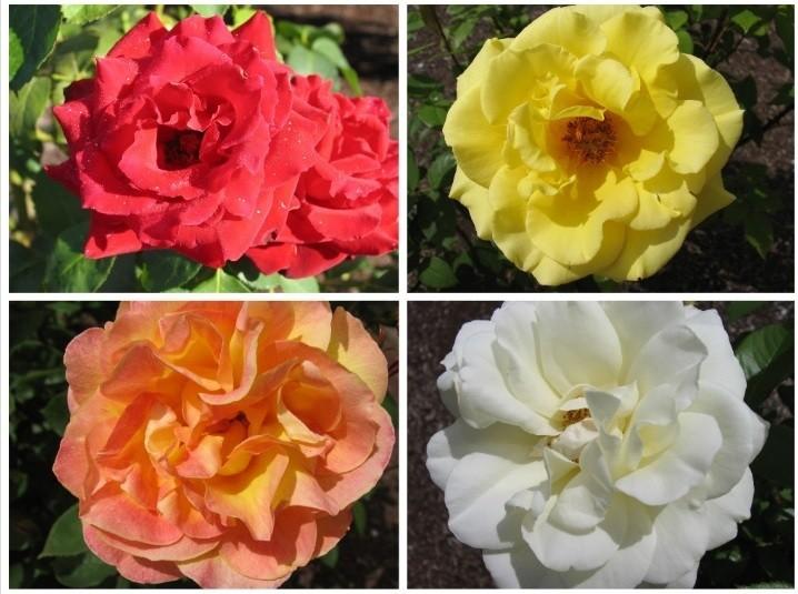 Saturday Morning Garden Blogging, Vol. 15.07: Crossword Puzzle Edition