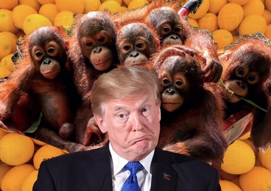 "GOP will wait 'til Trump rails against evil ""orangutans"" before they make sure he gets a neuro exam"