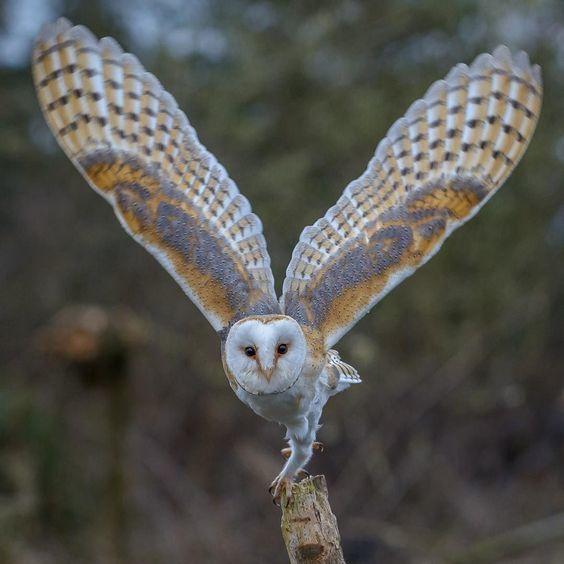 PWB: Toosdai Critters- Ornithomancy IV