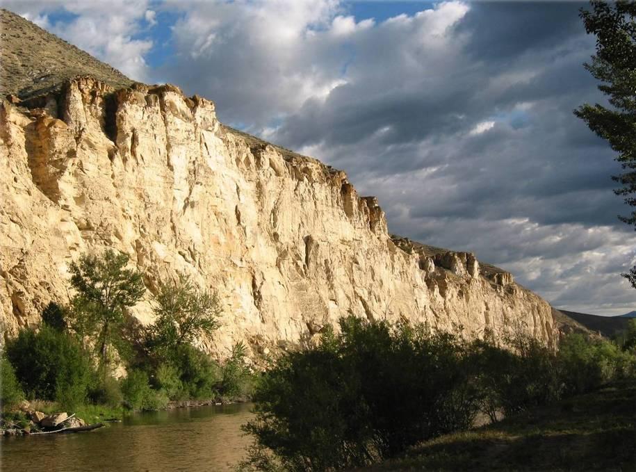 Dawn Chorus: Cliff Nesters - Living on the Ledge