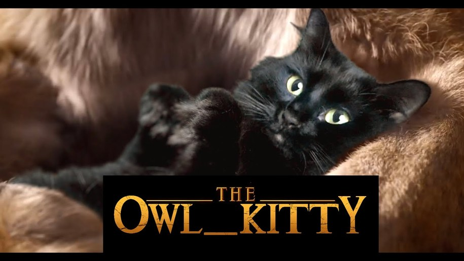 New Day Cafe: OwlKitty