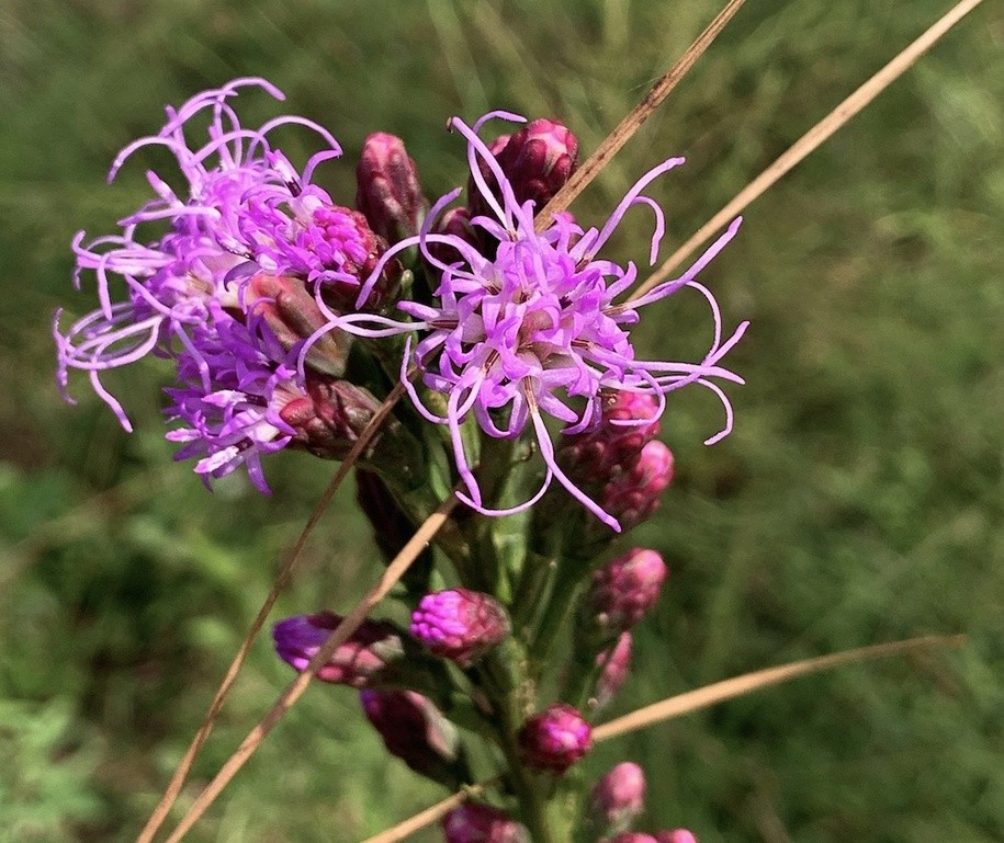 The Daily Bucket: Early Fall Wildflowers in the Florida Panhandle