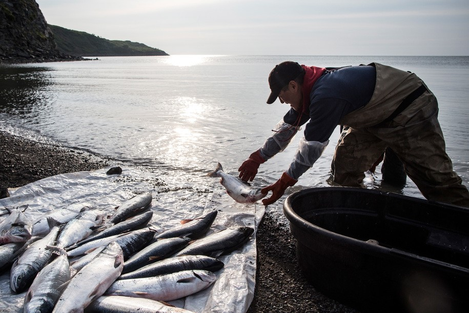 Alaska's water temperatures have been so hot this summer that salmon are dying off in large numbers