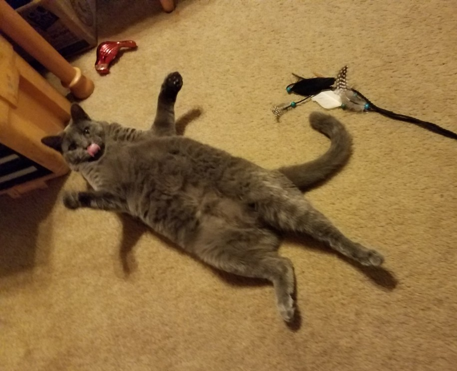 Feeling Russian Blue? Try some Cat Yoga