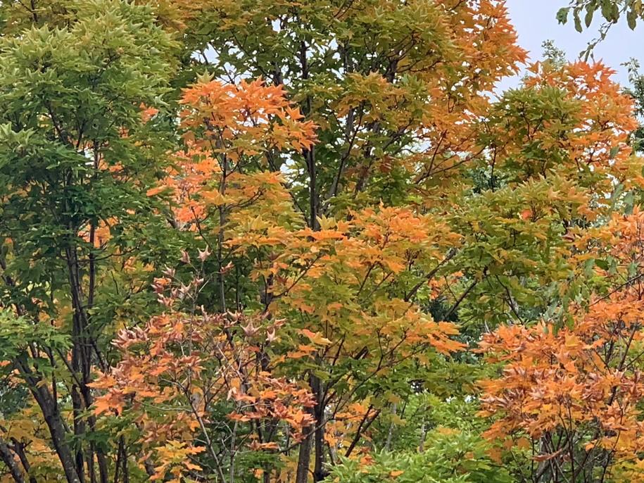 Saturday Morning Garden Blogging. Vol 15.39: Goodbye to Summer?