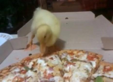 ducklingpizza.jpeg