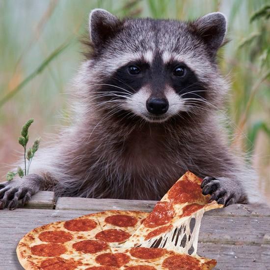 racoonpizza.jpg