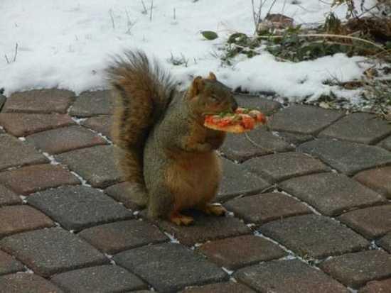 squirrelpizza.jpg