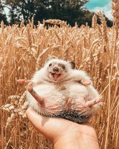 laughinghedgehog.jpg