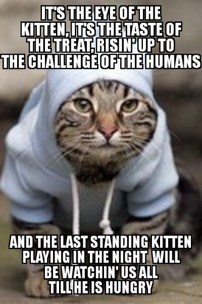 Caturday Pootie Dairy Come Look At Memes With Freddie Ugh This Stupid Week Edition