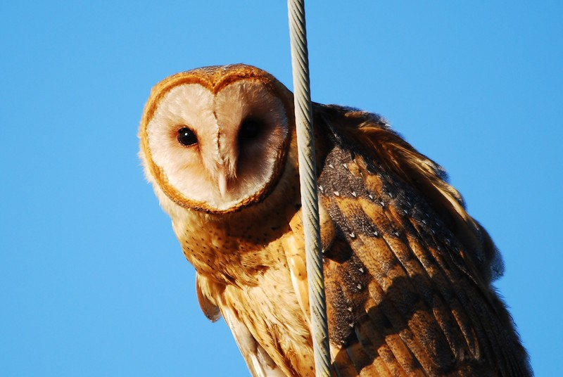 Dawn Chorus: Owl I Wanna Say is Happy New Year!