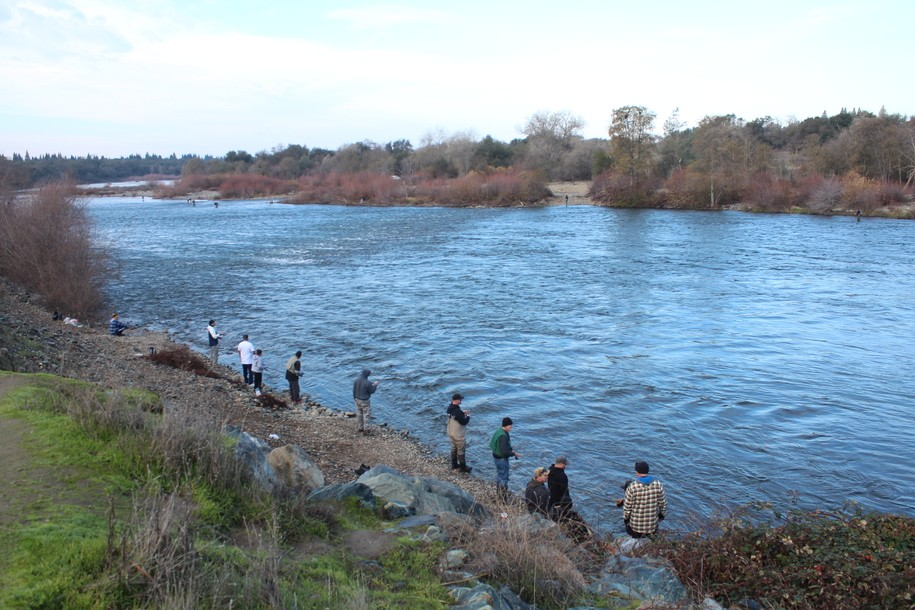 Update: Bureau of Reclamation slashes flows on American River at critical time for salmon