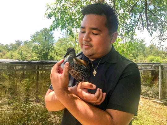 Anthony Tornito, Department of Agriculture biologist, cradles Tåno, one of Guam