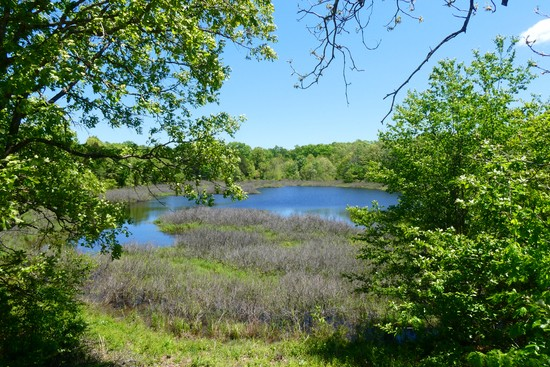 Tingler Lake is at the heart of Tingler Prairie Natural area, near West Plains, MO.
