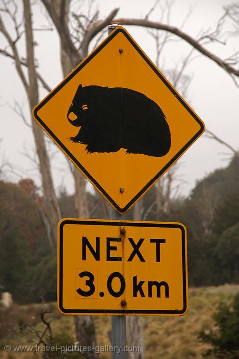 Trial by Wombat! Dont vote, it only encourages them.
