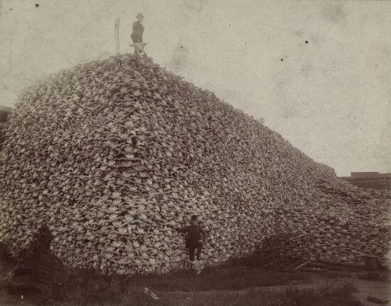 Buffalo skull pile, circa 1892