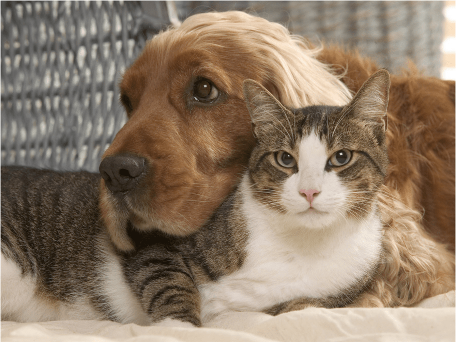 Covid, dogs, and cats: A scientist asks yet to be answered question
