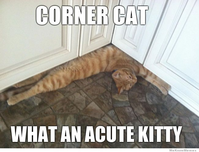 Caturday With the Peeps: The Naming of Cats (and maybe others)