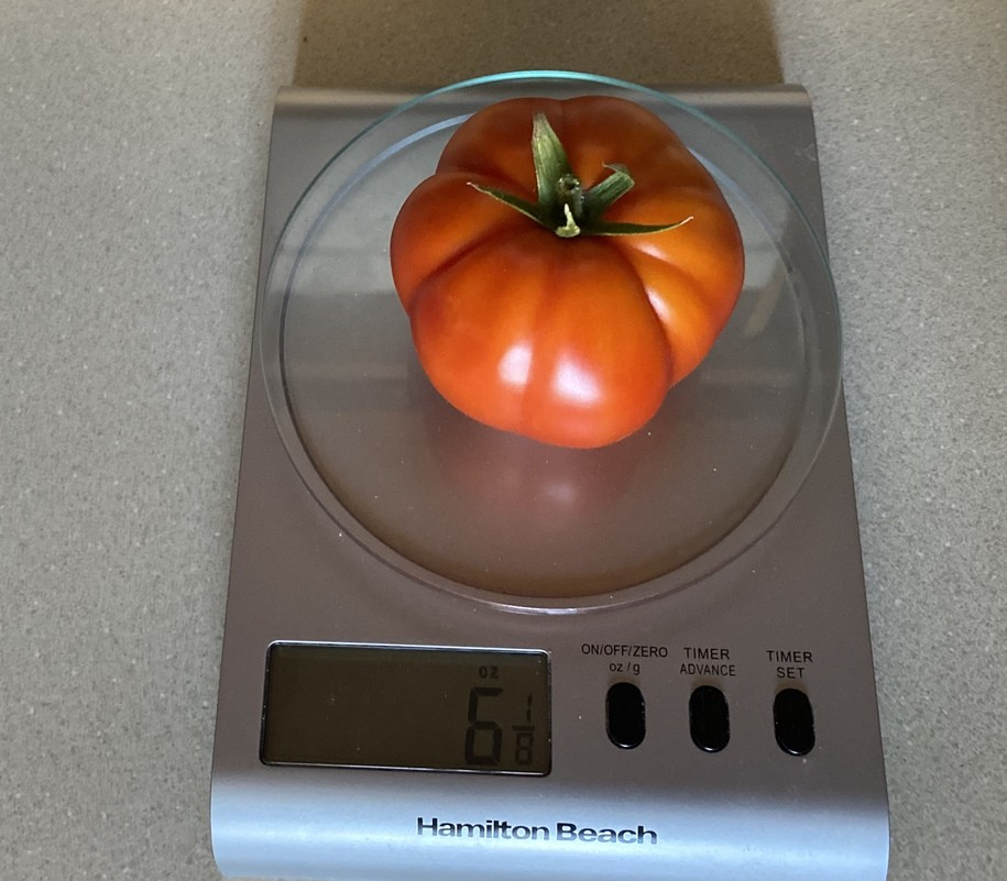 Saturday Morning Garden Blog vol.16.32 - An Ode to the Humble Tomato!