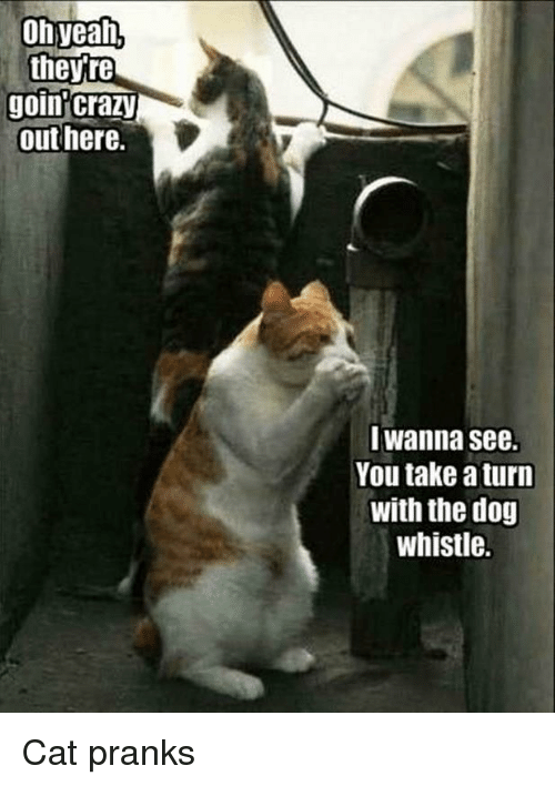 Prank-cats-tease-dogs-with-dog-whistle-attb-MeMe.png