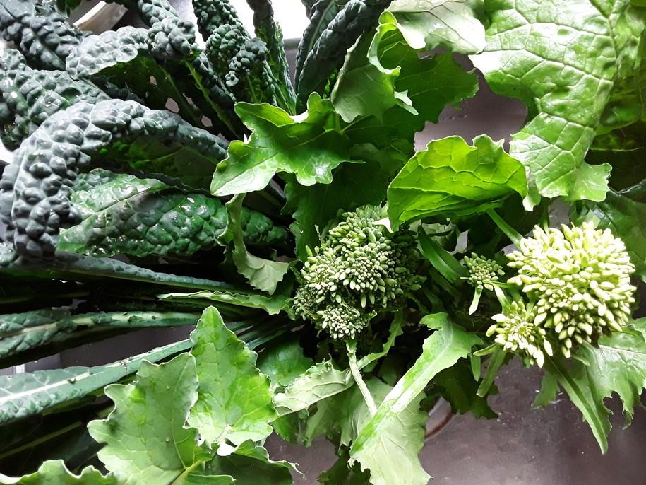 Saturday Morning Garden Blogging, Vol. 17.03: A Gardener's Inheritance