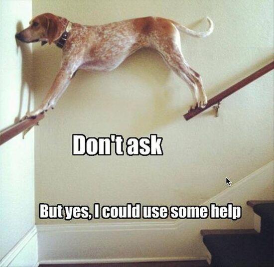 Mistakes-dog-stuck-on-banister-pinterest.jpg
